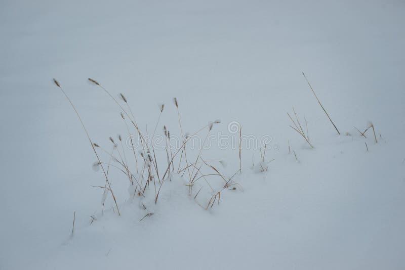 Correction d'herbe couverte par la neige photos libres de droits