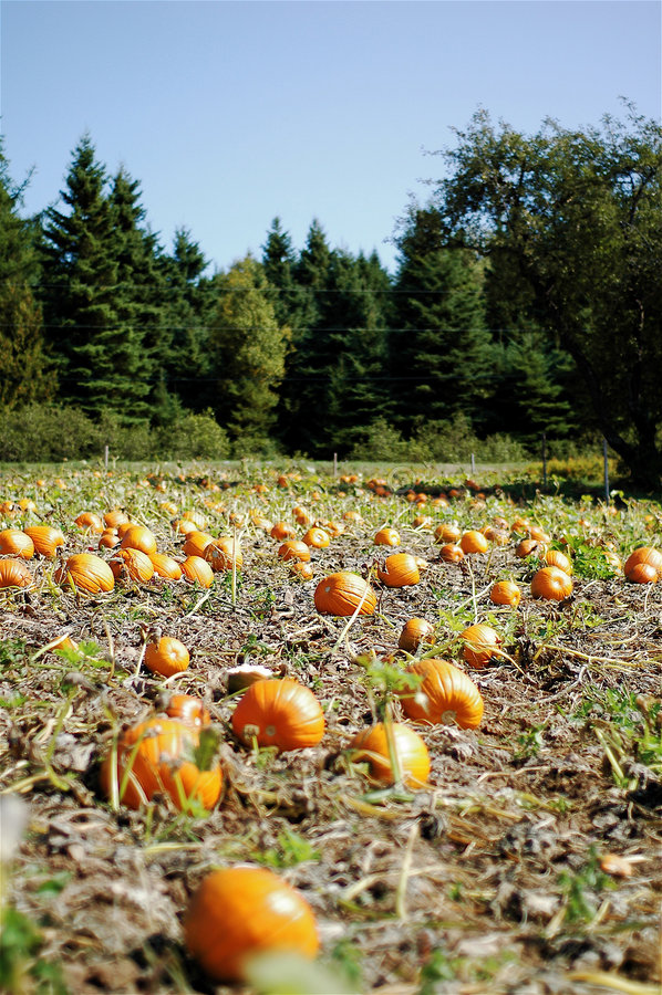 Correction de potiron et trees2 photographie stock libre de droits