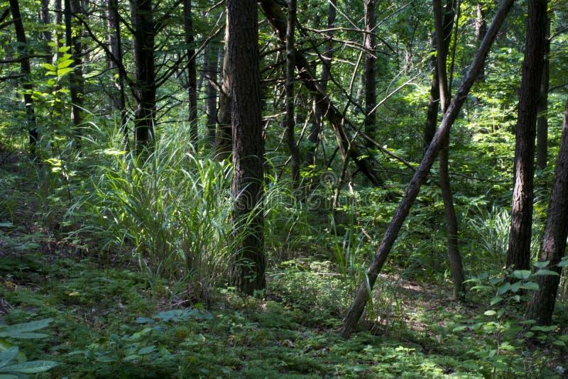 Correction dense d'herbe grande photos libres de droits
