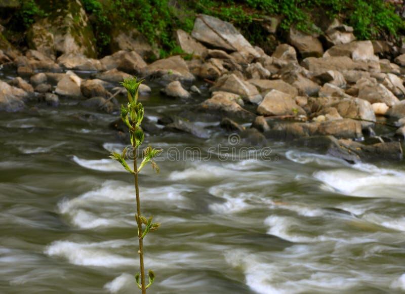 Corredeira no rio foto de stock