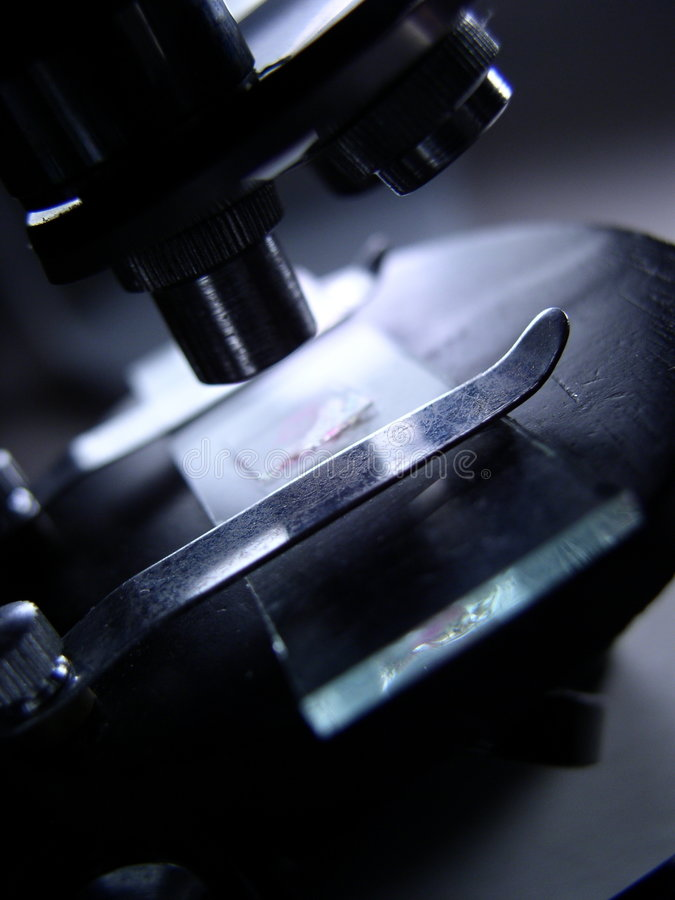 Corrediça do microscópio sob a examinação fotografia de stock royalty free
