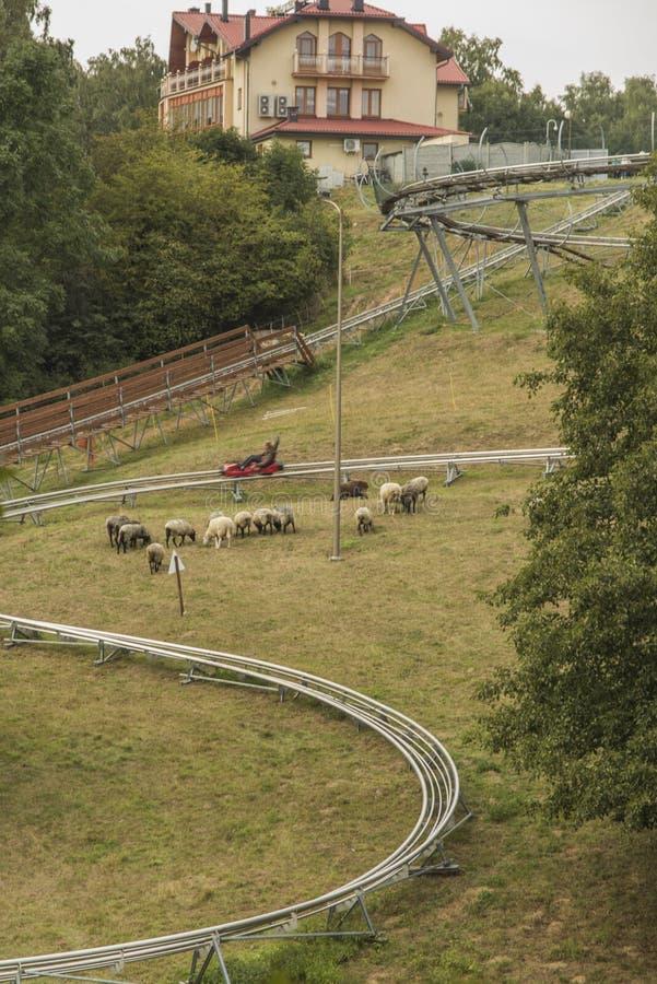 Corrediça gravitacional, corrida ao longo de um ano do toboggan na montagem St Anne, fotografia de stock royalty free