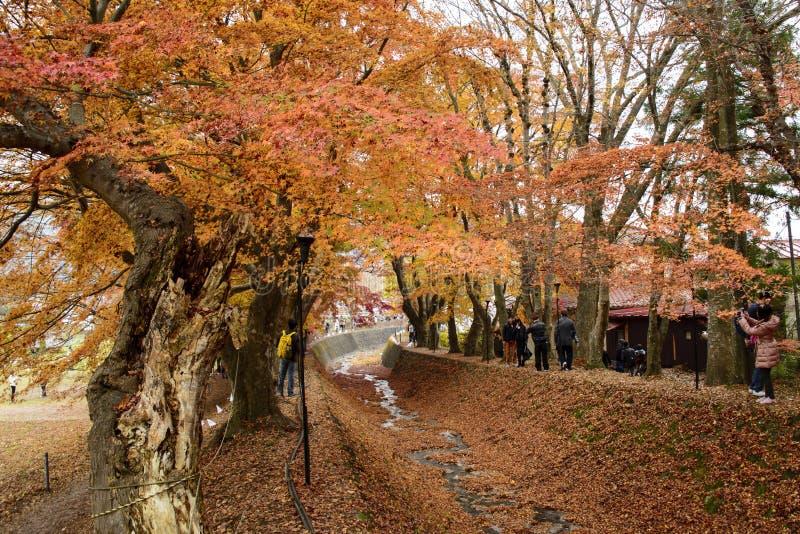 Corredor de Momiji, Kawaguchiko, Japão imagens de stock royalty free