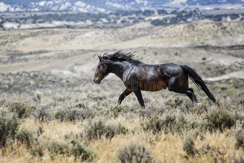 Corredor do cavalo selvagem de bacia de lavagem da areia fotografia de stock