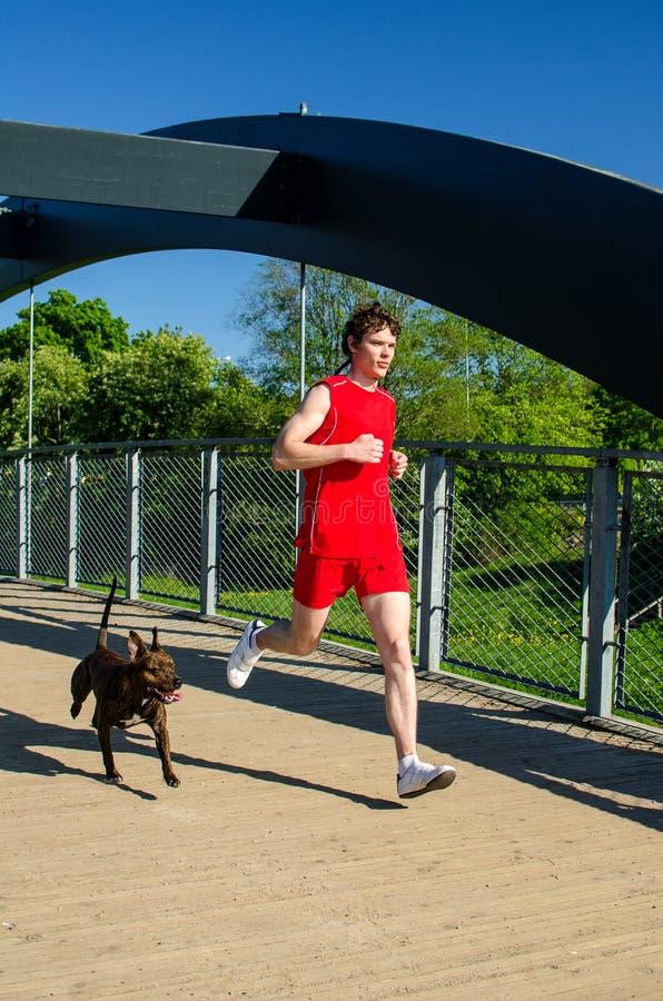 Corredor do desportista e do cão fotos de stock royalty free