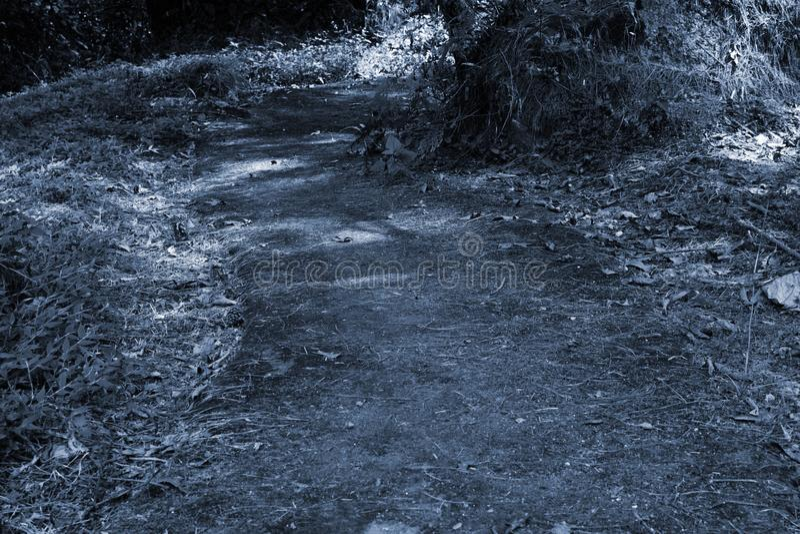 Corredor e escadas de Forest Road feitos da pedra na floresta imagem de stock royalty free