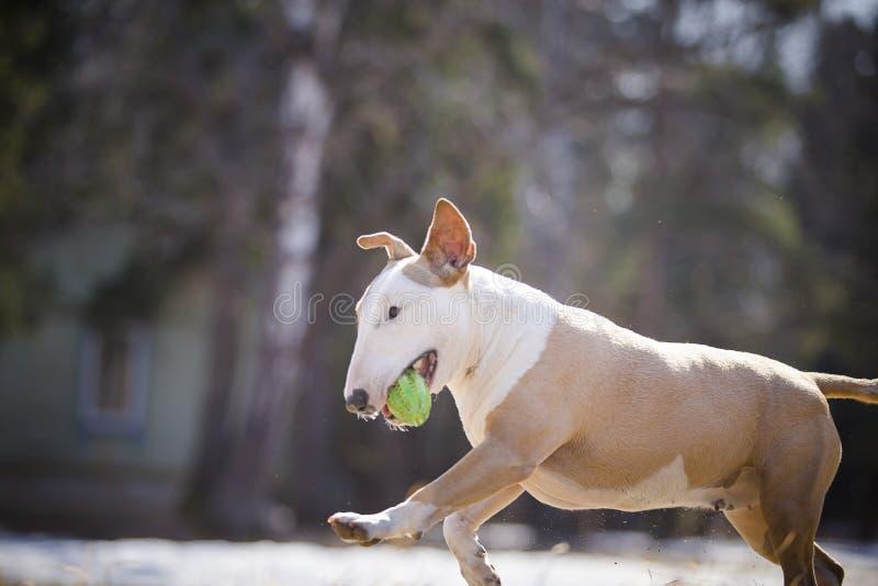 Corredor e jogo alegres do cão fotografia de stock royalty free