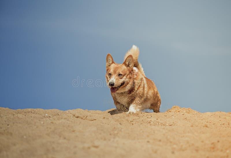 Corredor e jogo alegres do cão imagem de stock royalty free
