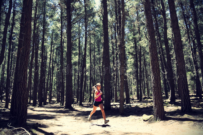Corredor en bosque imagen de archivo libre de regalías
