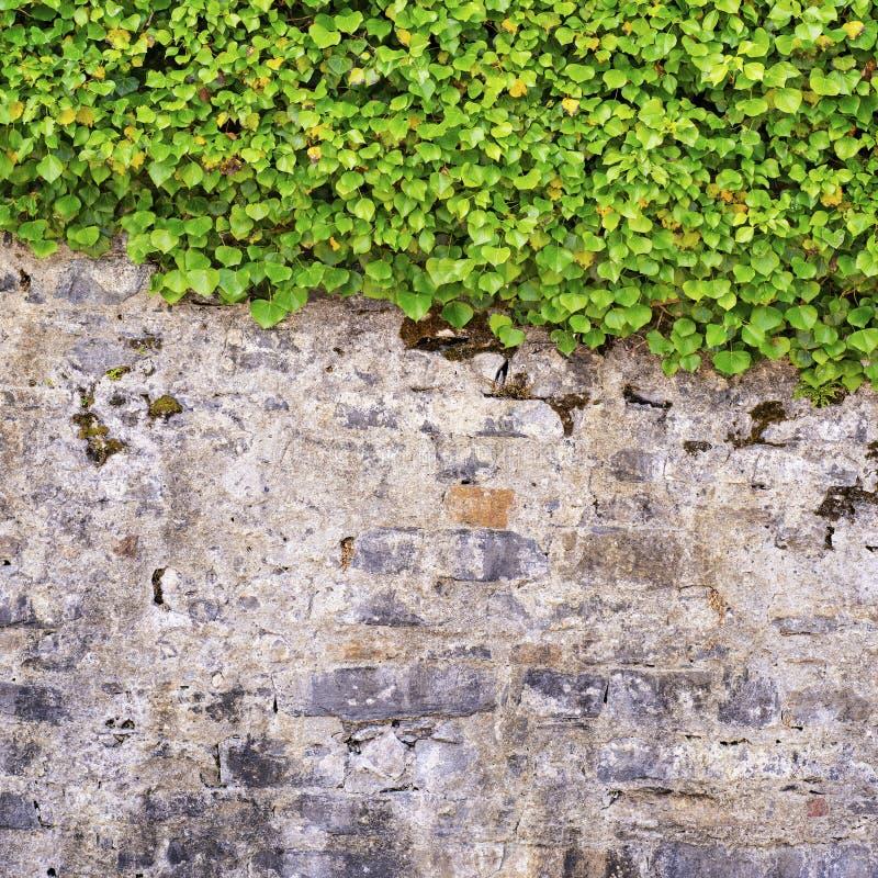 Corredor verde na parede rachada foto de stock royalty free