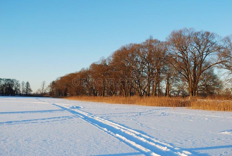 Correia da floresta com uma grama alta e árvores perto do campo Dia de inverno ensolarado gelado imagem de stock royalty free