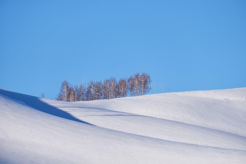 A correia de árvores de vidoeiro sob a geada na neve coloca saltos sob o céu azul imagem de stock royalty free