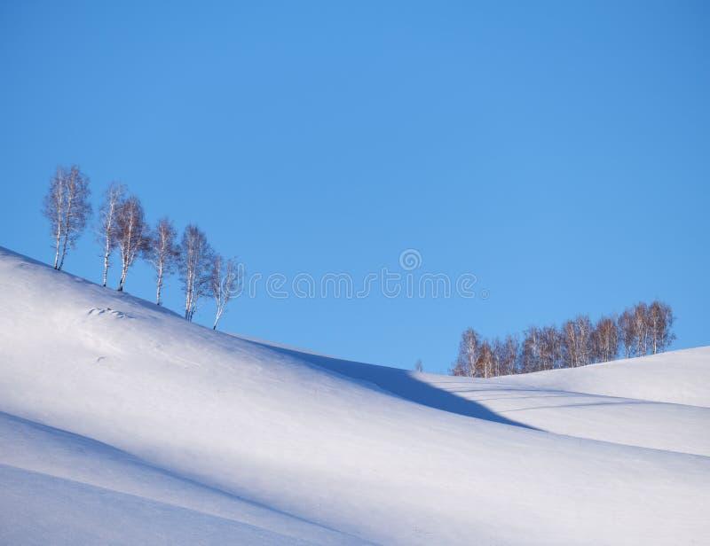 A correia de árvores de vidoeiro sob a geada na neve coloca saltos sob o céu azul na estação do inverno fotos de stock royalty free