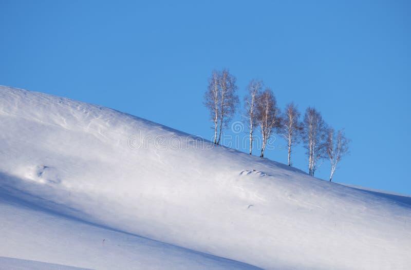 A correia de árvores de vidoeiro sob a geada na neve coloca saltos sob o céu azul na estação do inverno imagens de stock royalty free