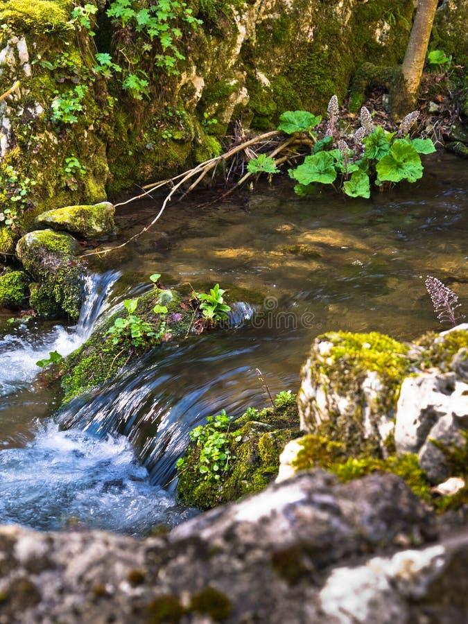 Corrente adorabile dell'acqua alla molla in anticipo, montagne del homolje immagini stock libere da diritti