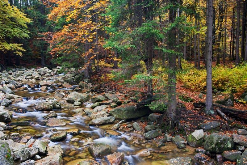 Corrente in Autumn Mountain Forest immagini stock libere da diritti