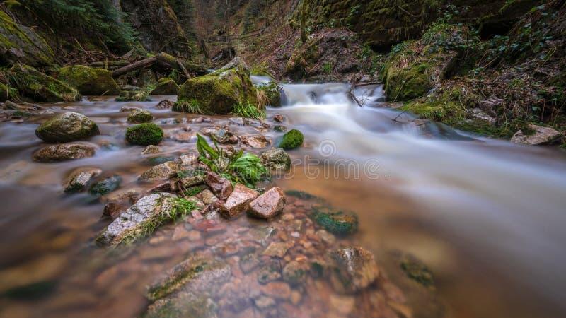 Corrente in Blackforest fotografia stock libera da diritti