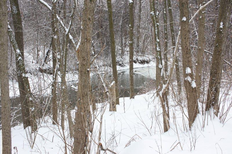 Corrente che passa la foresta innevata di inverno immagini stock libere da diritti