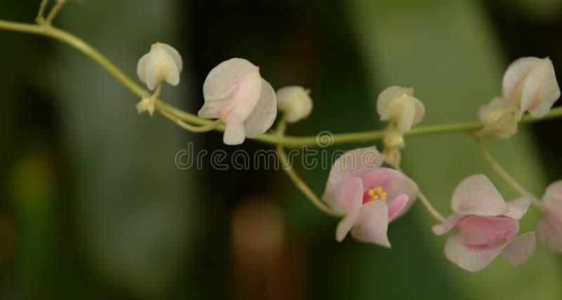Corrente de flores do amor imagens de stock royalty free