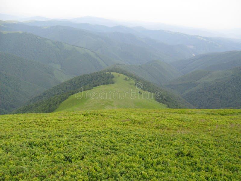 Corrente de montanha Carpathian fotos de stock