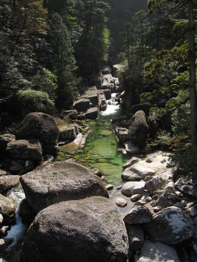 Corrente del fiume dentro la foresta del cedro immagine stock libera da diritti
