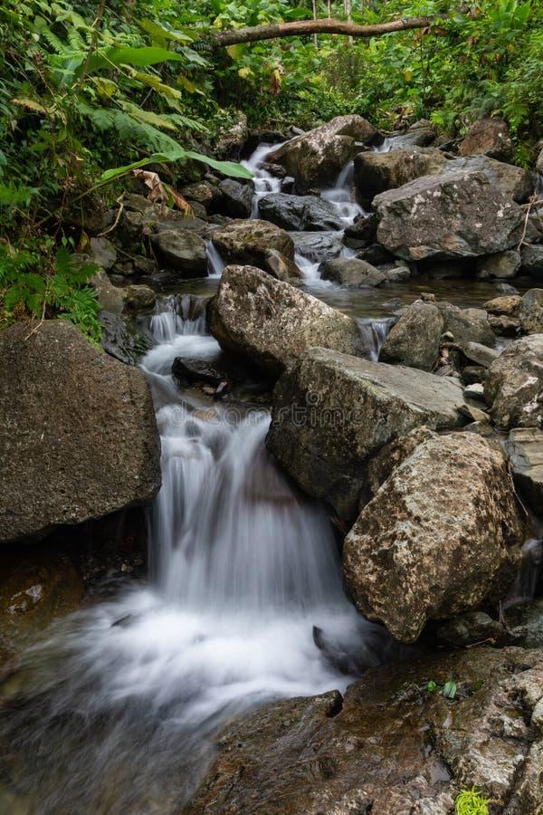 Corrente dell'acqua che attraversa il legno immagini stock libere da diritti