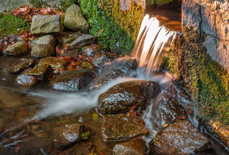 Corrente dell'acqua con le pietre nella foresta immagini stock
