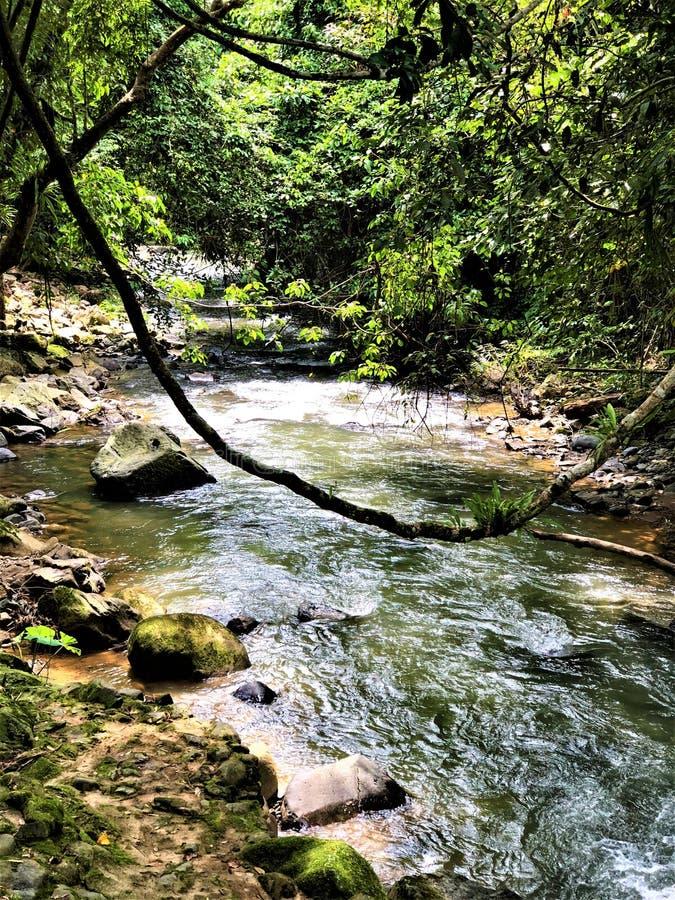 Corrente a Khao Sok National Park, Tailandia fotografie stock