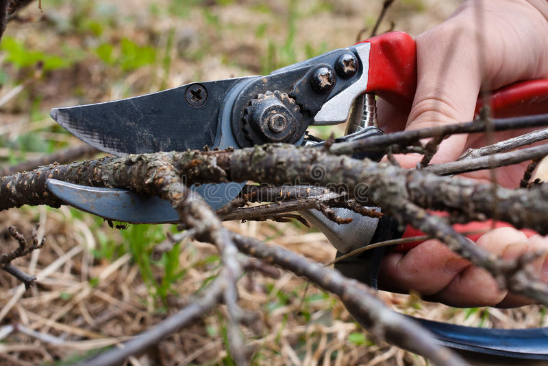 Corrente nera di potatura dal pruner del giardino immagini stock