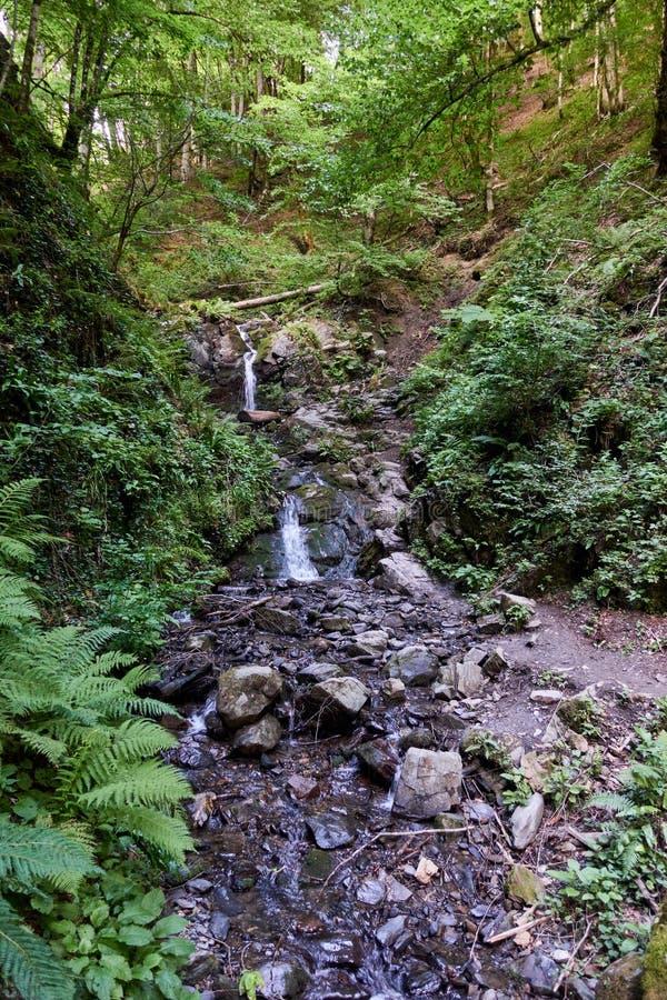 Corrente pietrosa nella cascata della foresta di estate nella foresta fotografia stock