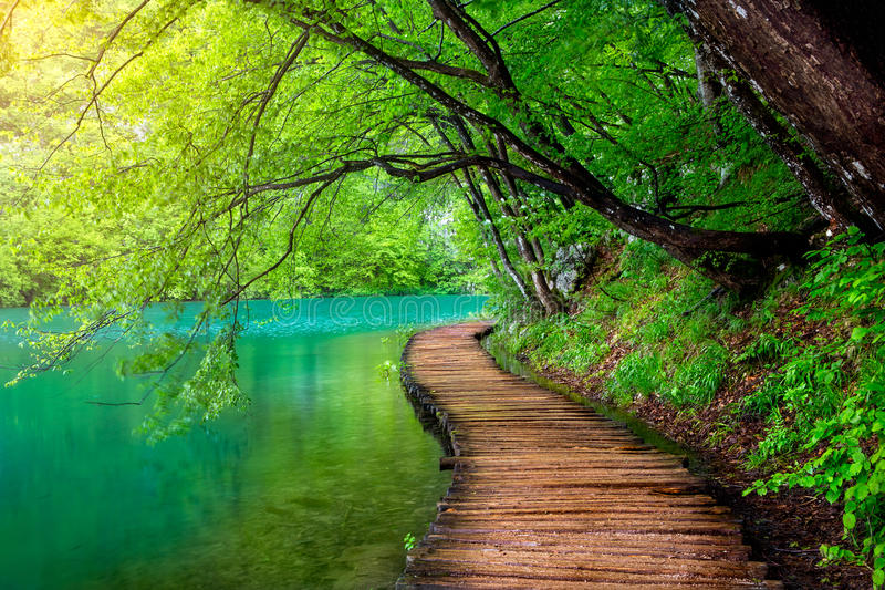 Corrente profonda della foresta con acqua cristallina nel sole