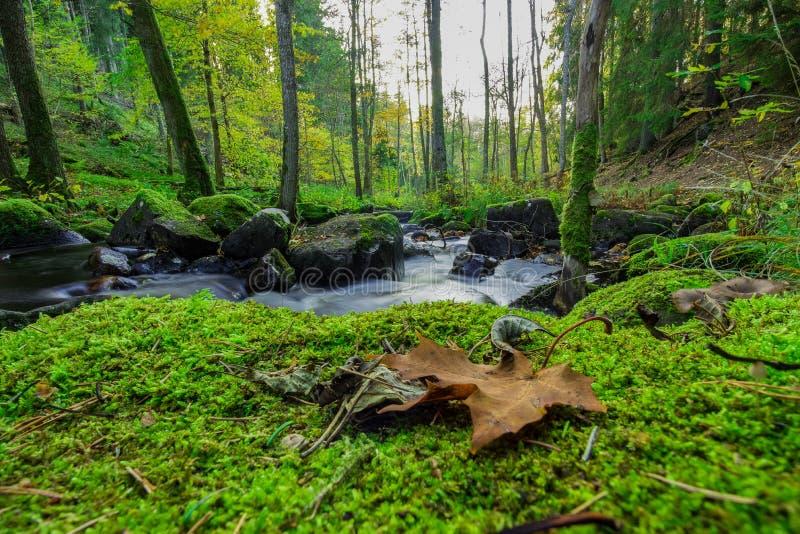 Corrente scorrente dietro le foglie cadute fotografia stock