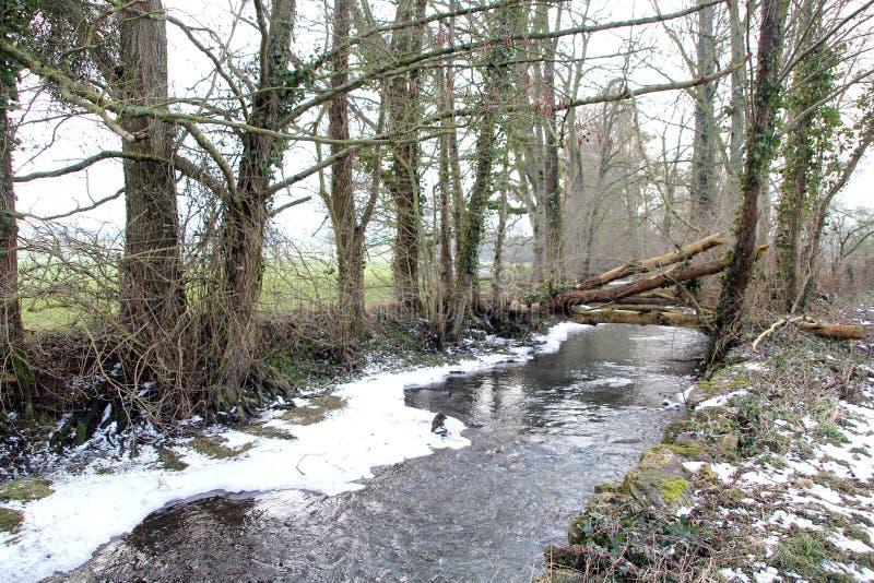 Corrente, un piccolo fiume in mezzo al legno nell'inverno immagini stock libere da diritti