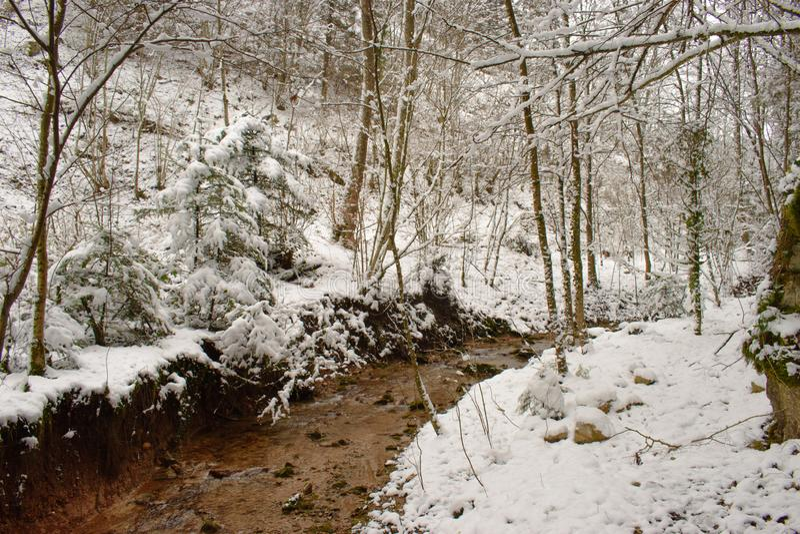 Corrente in una foresta innevata svizzera presa vicino a Linn, Svizzera, nel cantone di Argovia immagini stock libere da diritti