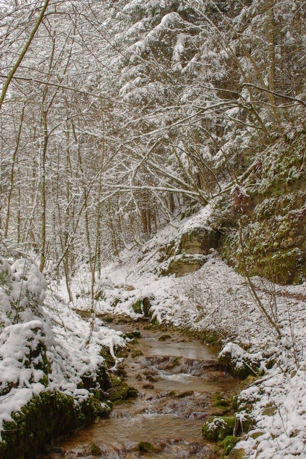 Corrente in una foresta innevata svizzera presa vicino a Linn, Svizzera, nel cantone di Argovia immagini stock