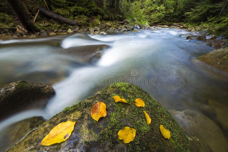 Corrente verde selvaggia diretta a flusso rapido del fiume della foresta della montagna con acqua cristallina e la foglia gialla  immagini stock libere da diritti