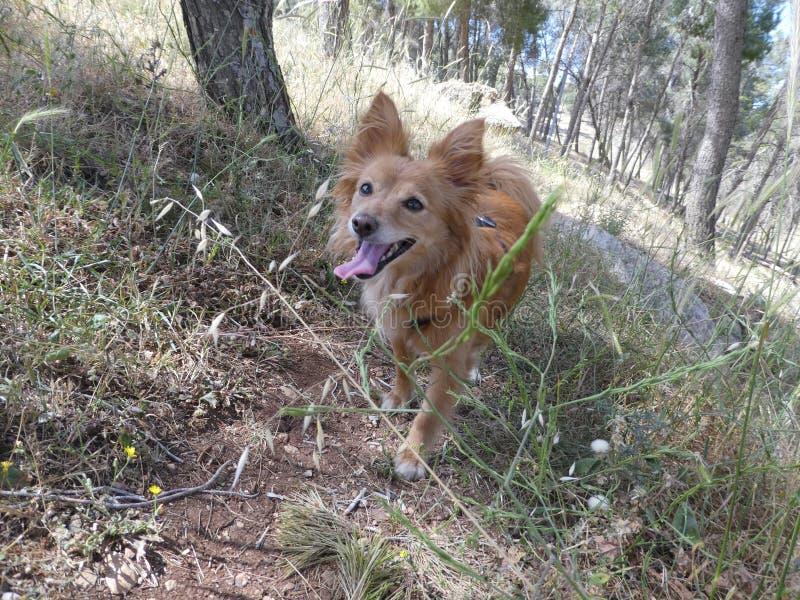 Corrida da natureza da grama de cão foto de stock royalty free