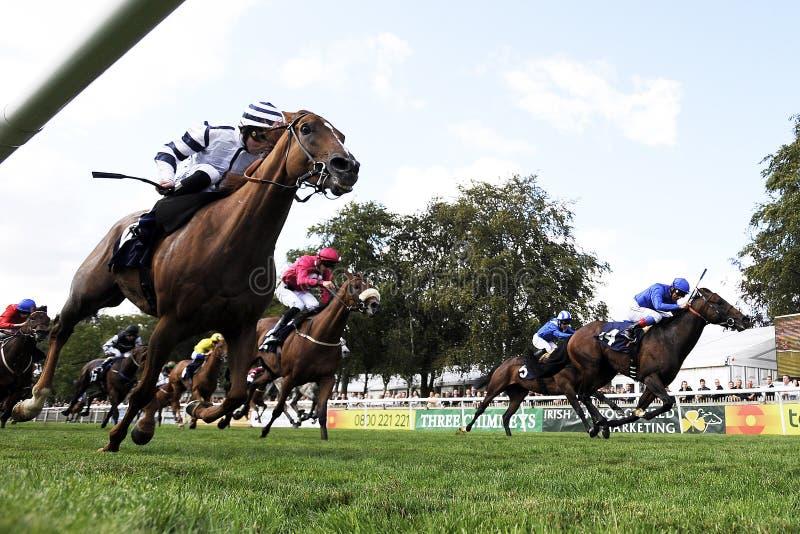 Corrida de cavalos imagem de stock royalty free