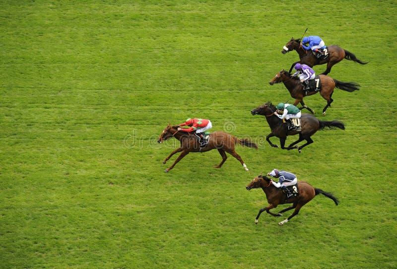 Corrida de cavalos fotos de stock