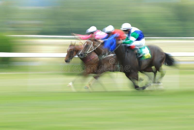 Corrida de cavalos em Chuchle foto de stock royalty free