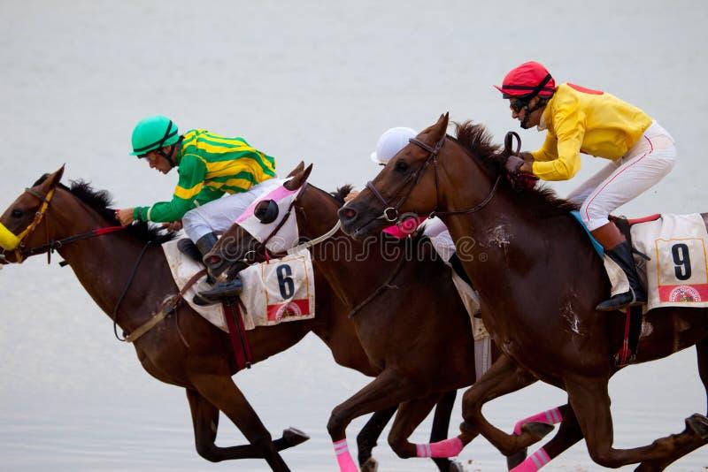 Corrida de cavalos em Sanlucar de Barrameda, Espanha imagem de stock