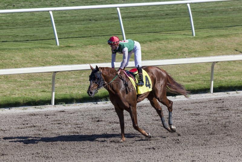 Corrida de cavalos no Gulfstream Park, Florida fotografia de stock