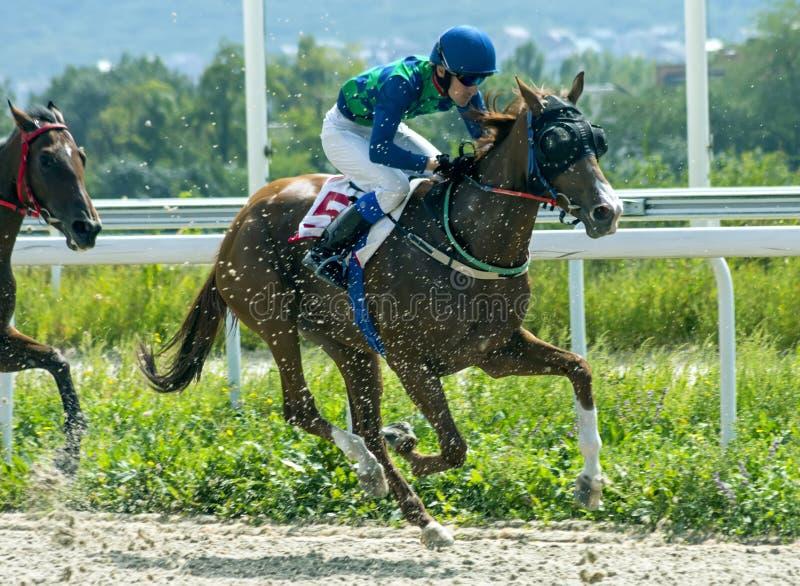 Corrida de cavalos para o prêmio em honra da égua Tric grande fotos de stock royalty free