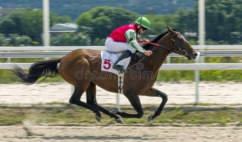 Corrida de cavalos para o prêmio em honra de Derby Jasil em Pyatigors foto de stock royalty free