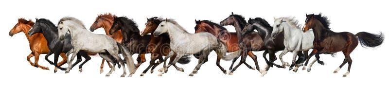 Corrida do rebanho do cavalo fotos de stock royalty free