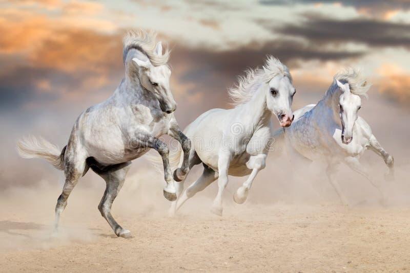 Corrida dos cavalos brancos imagem de stock