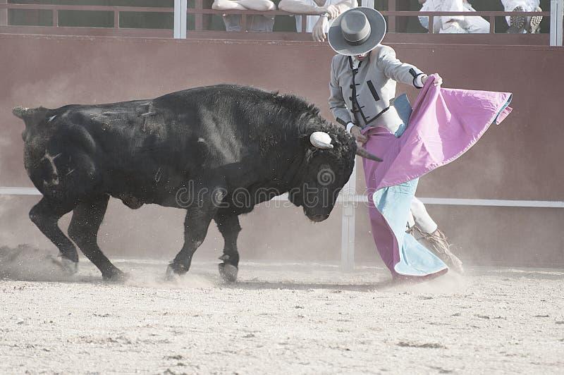 Corrida. Imagen del toro que lucha de España. Toro negro fotografía de archivo libre de regalías