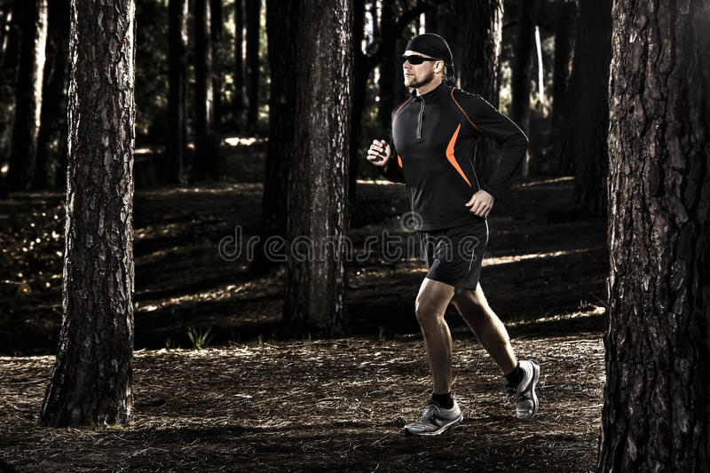 Corrida na floresta fotografia de stock royalty free