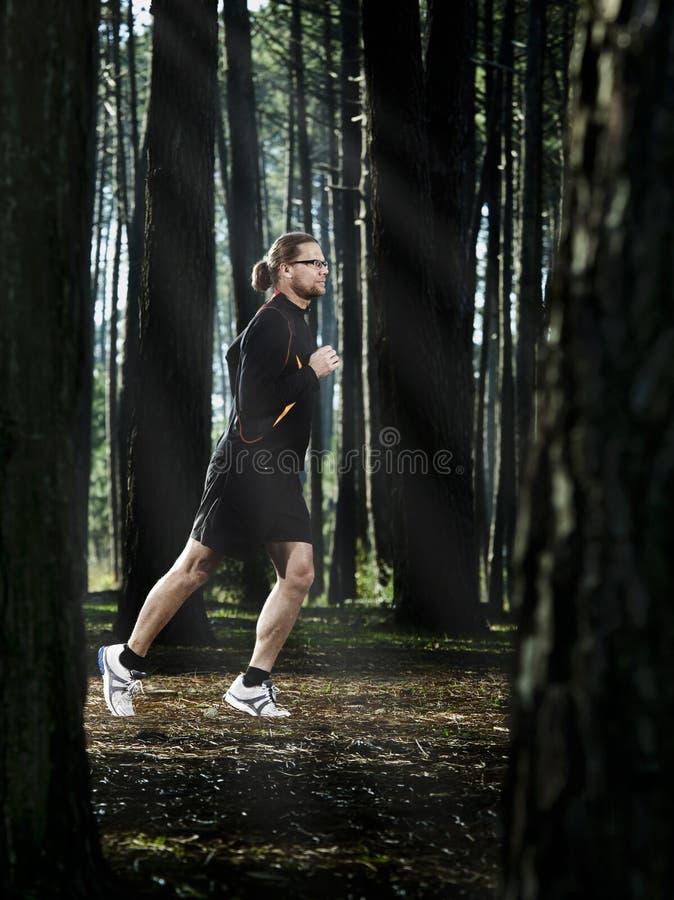 Corrida na floresta imagens de stock