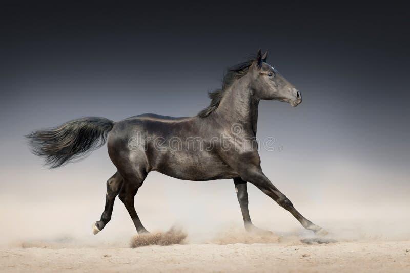 Corrida negra del caballo foto de archivo libre de regalías